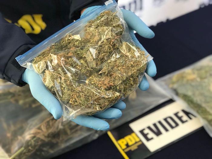 PDI Linares sacó de circulación más de 2 mil 700 dosis de Cannabis