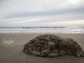 jalama_beach_mbphoto-2