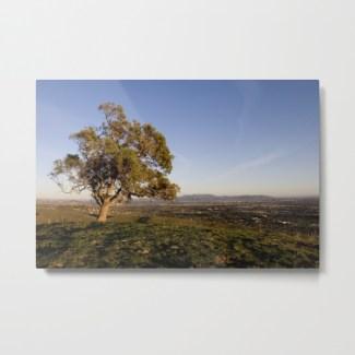 dream-tree-ldz-metal-prints