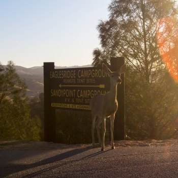 Maureen Bates Photography, Lake Naciemento, California, Camping, Adventure, maureenbates.com