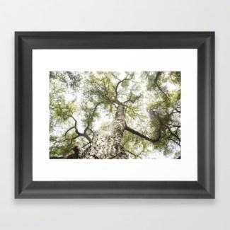 Maureen Bates Photography, Tree, Ojai, California, Fine Art Print