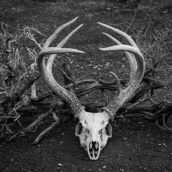 Maureen Bates Photography, Deer Skull, Home Decor, Art Print, Adventure, https://society6.com/product/deer-skull-zgj_print?curator=maureenbatesphotography