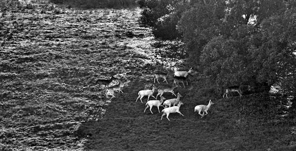 Deer Photo by Maureen Murdock