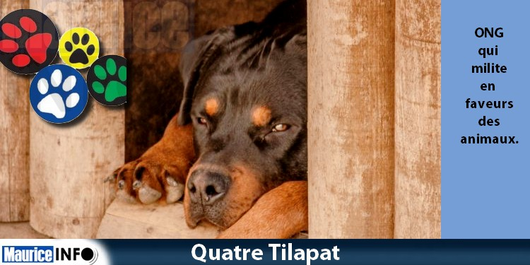 World Animal Rights Day