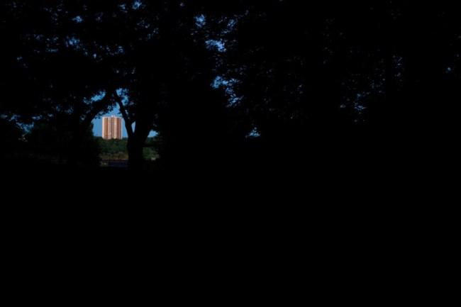 Pinhole Forest