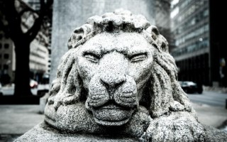 The Lion Sleeps Tonight...
