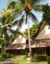 Exotic bungalows among coconut trees