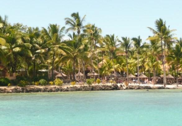 Coconut trees along the coast