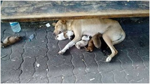 Four pups look forward to a new life in the UK – Mauritius Times