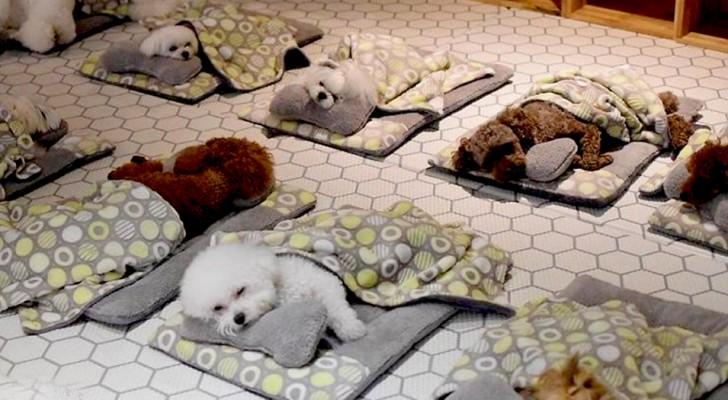 Come avviare un asilo per cani con i finanziamenti a fondo perduto