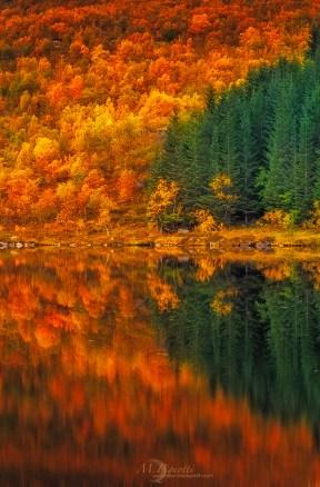 ©-Norway-Autumn-copia