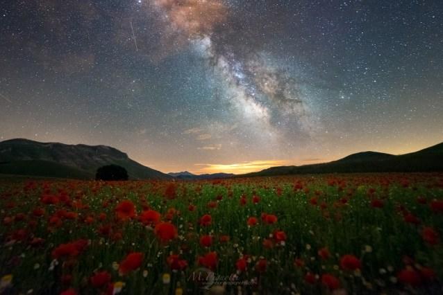 night-poppies