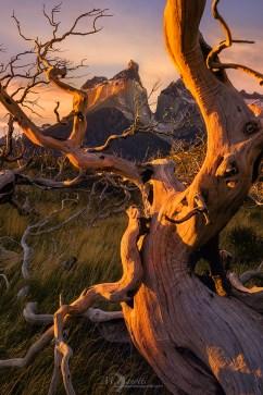 ©-Braided-Patagonia
