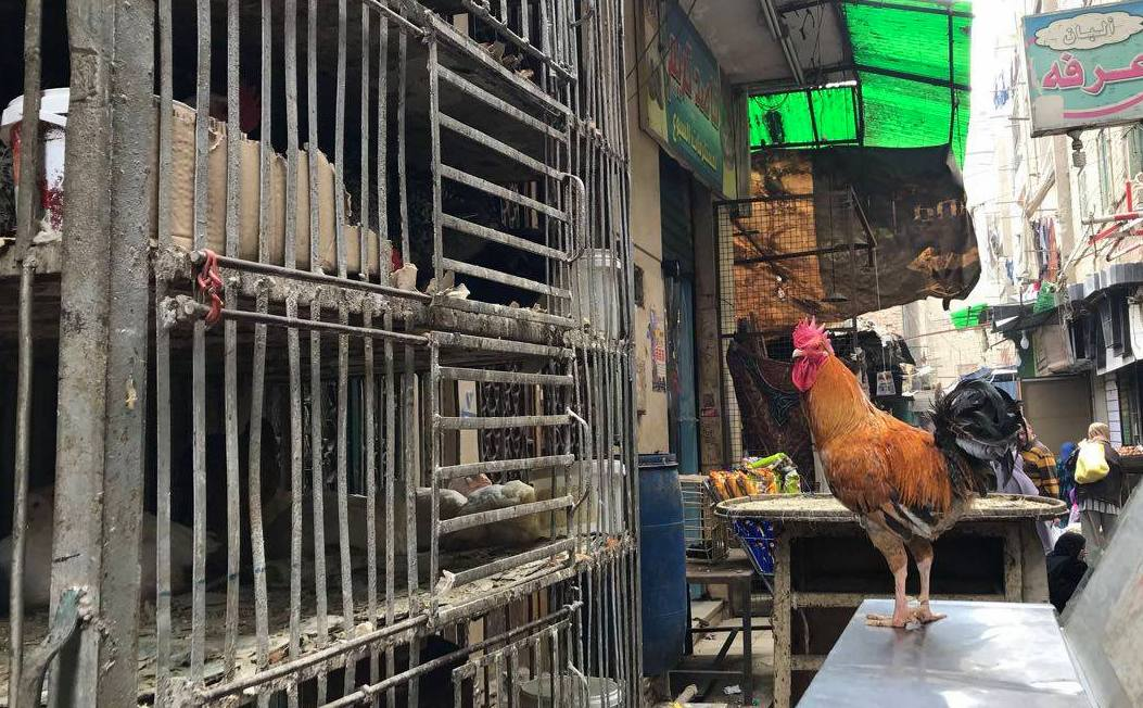 Poultry shop in local market in Cairo