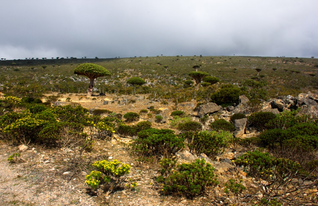 Socotra island is called the Galapagos of the Indian Ocean