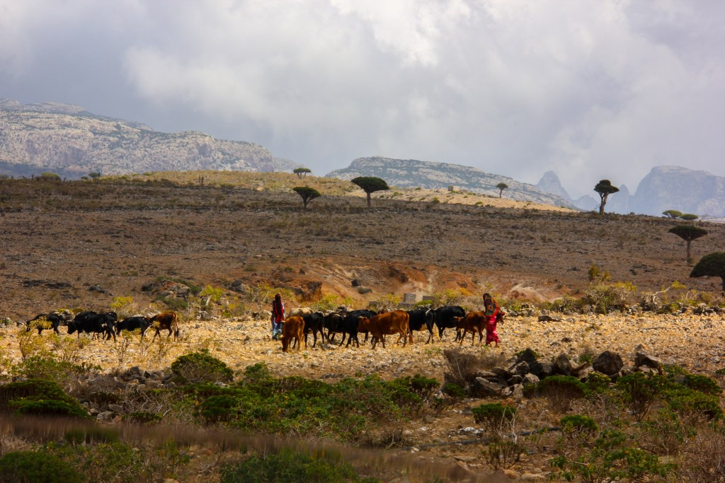 the bedouins of diksam plateau