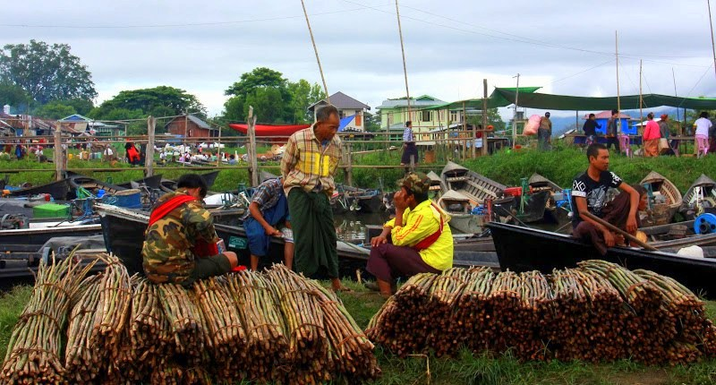 Young bamboo being sold at lake inle weekly markets