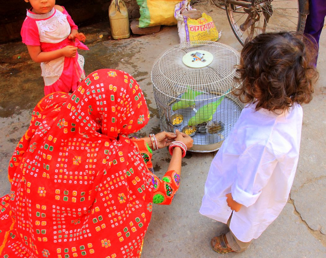 A woman feeding her pet parrots on the street on Jaipur