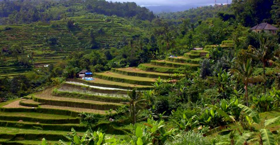 The famous Subak cultivation system of Bali