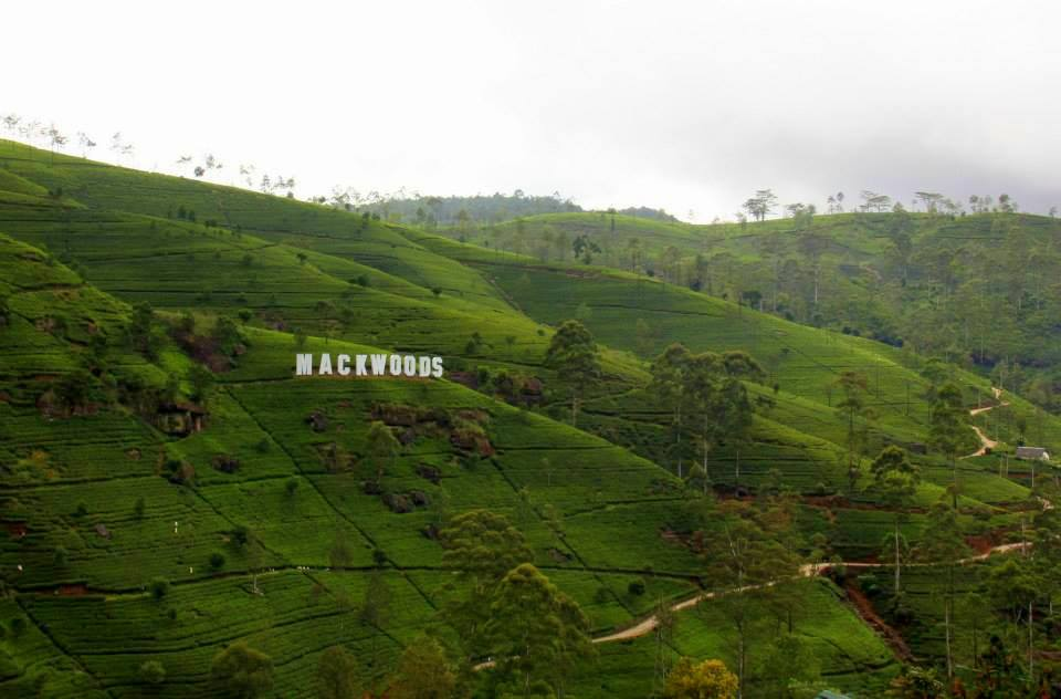 The beautifully tended tea gardens of the Hill Country near Nuwara Eliya