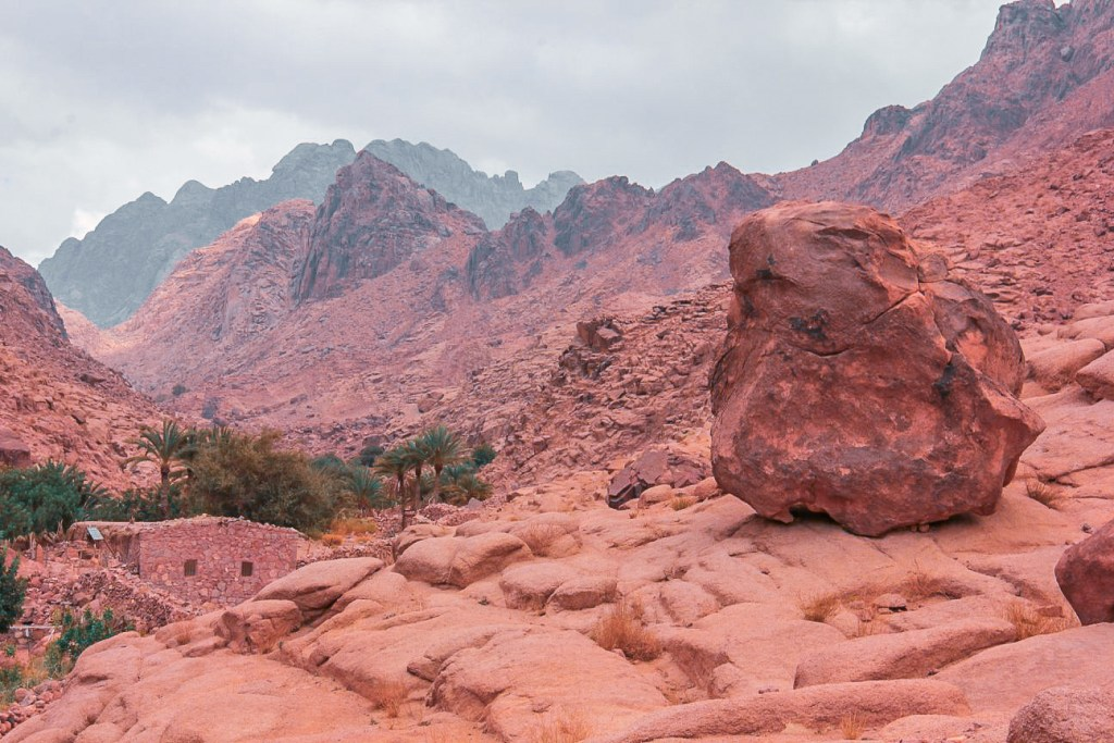 Slivers of green amidst stark mountains of Sinai