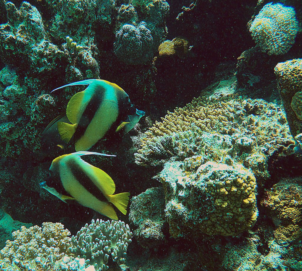 UNDERWATER PHOTO OF MARSA ALAM