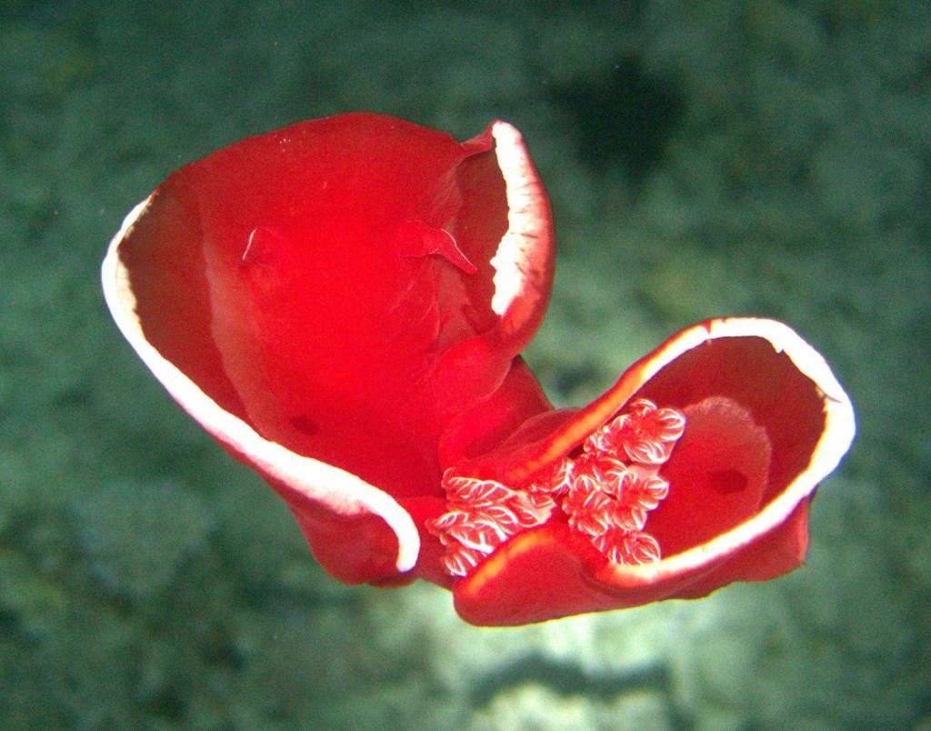 beautiful sight seen during marsa alam diving