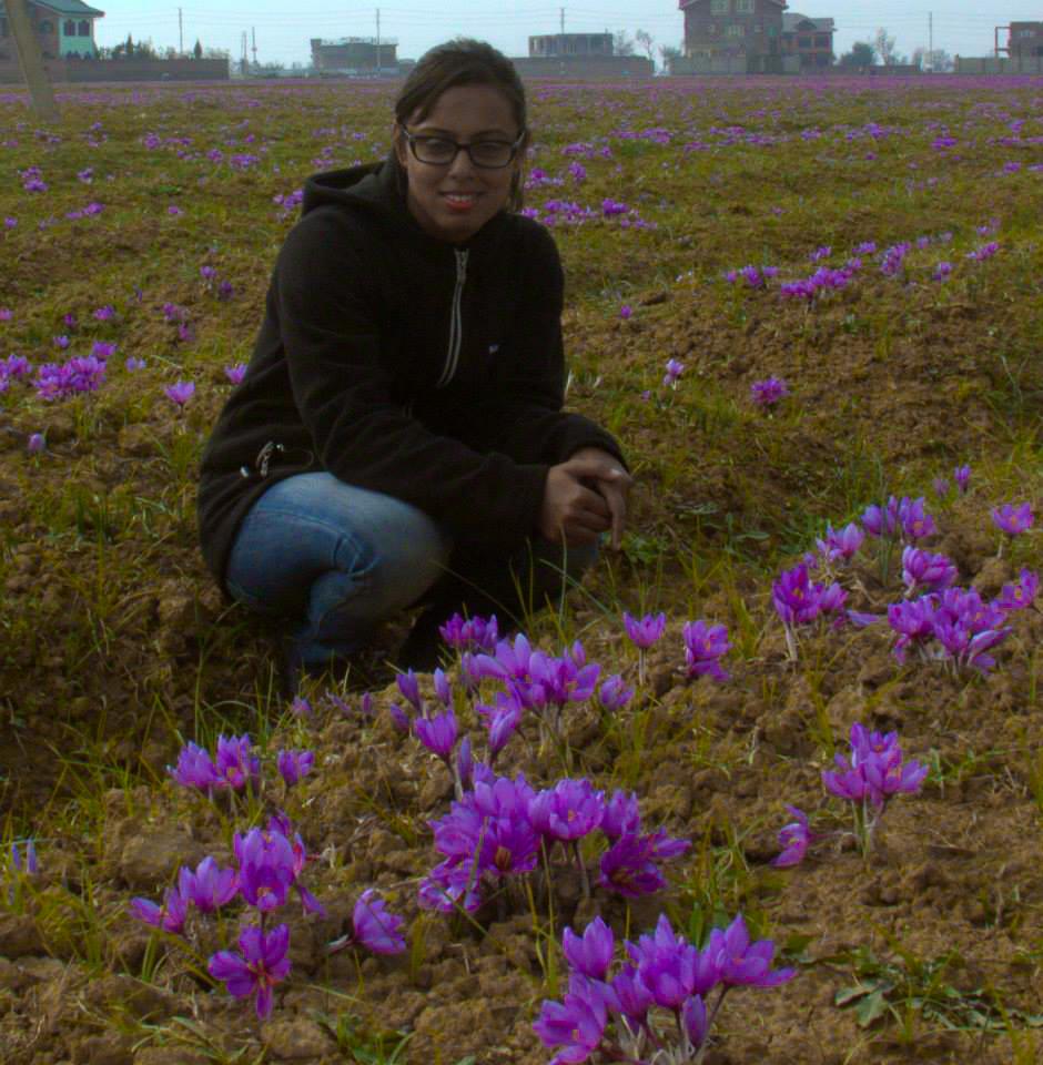 at a saffron field in pampore