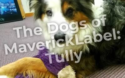 Dogs of MaverickLabel, Part 3 – Tully Shepherd