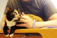 Tortie cat Kei$a