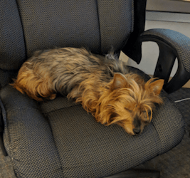 And he naps in Louanne's chair