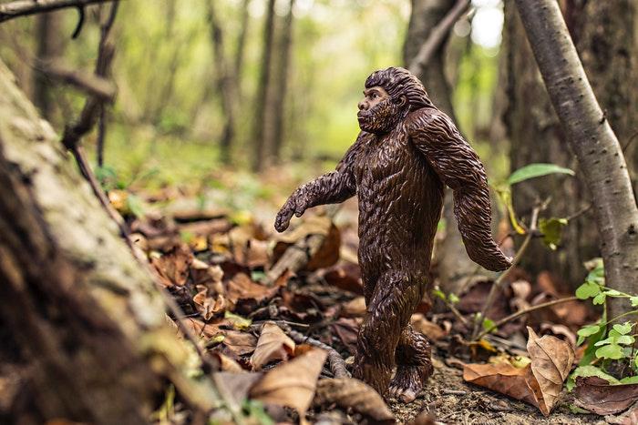 Evolución del Hombre durante el Paleolítico