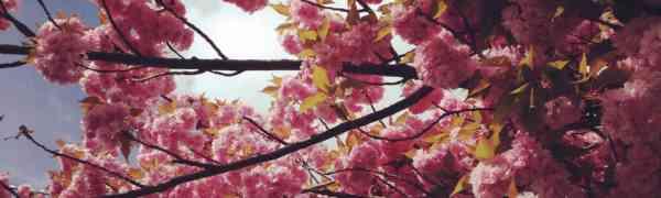 Lernen Sie Japanisch 日本語 am Max-Weber-Berufskolleg