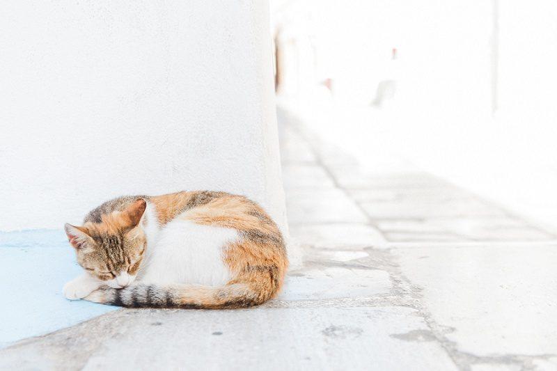Mottled Cat Sleeping On The Streets of Oia Santorini