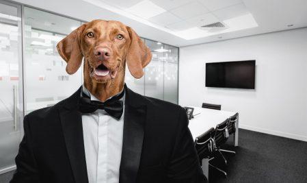 loyal sales manager