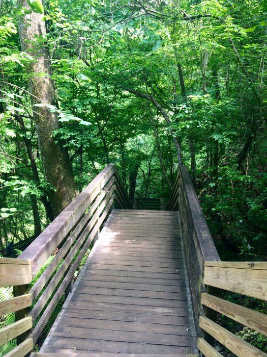 Visit Devil's Millhopper Sinkhole in Gainesville, FL