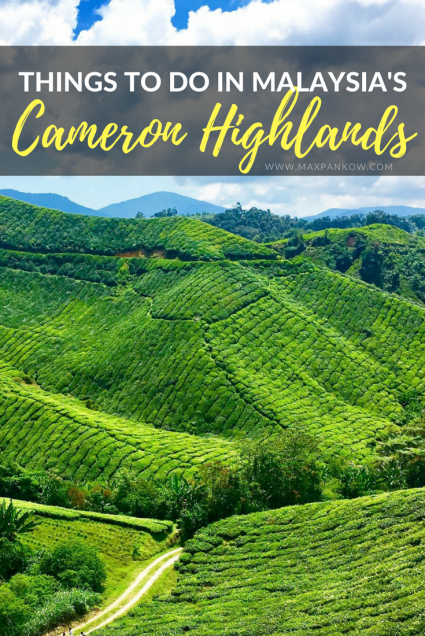 Things to do in Malaysia's Cameron Highlands - Max Pankow Adventures