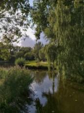 Dag 16 met onderwerp omgeving. Titel: Biesbosch.