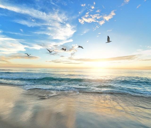 Beach Birds Dawn Dusk Hd Wallpaper Nature Ocean