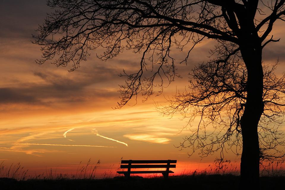 Free Photo Nature Gold Sunset Twilight Bench Tree Sun
