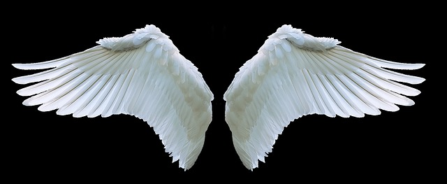 Free Photo Swing Fly Swan White Feather Angel Wing Symbol