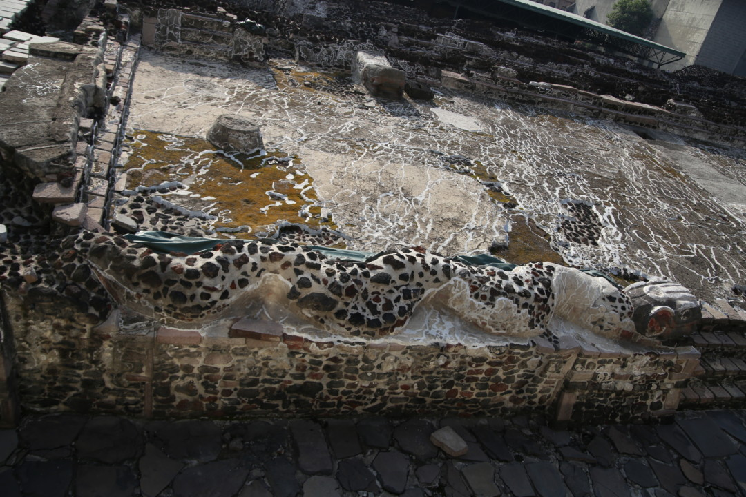 Détail du serpent, Templo Mayor, Mexico © M.C.