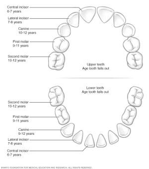 Baby teeth  Mayo Clinic