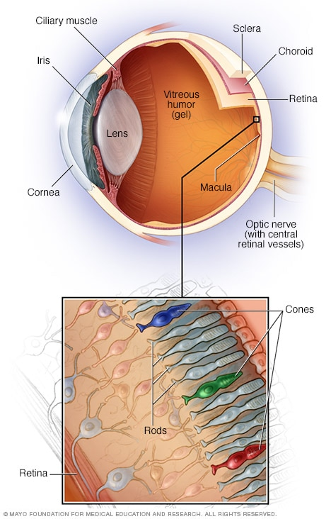Inner eye - Mayo Clinic