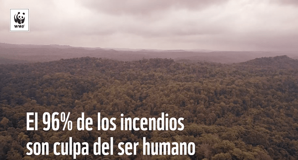 informe incendios forestales wwf 2019_opt