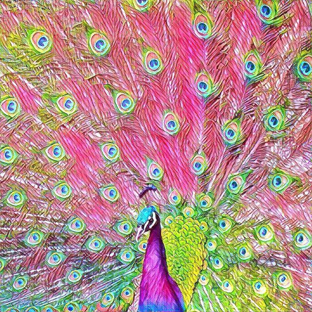 Psychedelic peacock, prisma filter of a High Park Toronto peacock