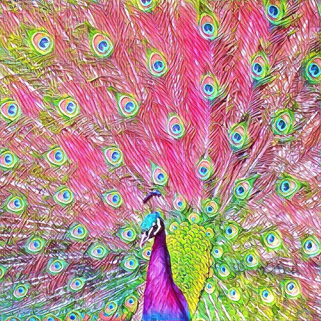 I caught this peacock strutting his stuff for the laydeez at the High Park zoo, and have played with the image in various ways since. The black and white print is one of my most popular blocks, but I think I'm going to have to add some colour ones - this psychedelic version is too fun not to use.#peacock #psychedelic #zoo #toronto #pink #blue #bird #birds #torontophotography #torontophotographer #torontolife #igerstoronto #ig_daily #igersworldwide #ig_photooftheday #igaddicts #ig_global_life #igtravel #igers #yyz #the6 #the6ix #madeincanada #filter #prisma