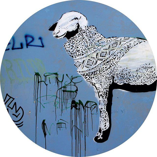 Oslo Norway sheep in cardigan graffiti spray art