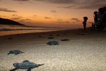 Conservacion de la Tortuga 2015