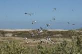 Impulsa la Secretaría de Desarollo Sustentable decreto de Área de Protección Natural de Flora y Fauna para la Bahía Santa María